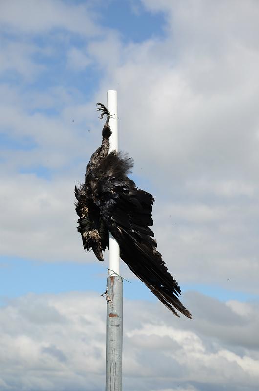dead_raven2