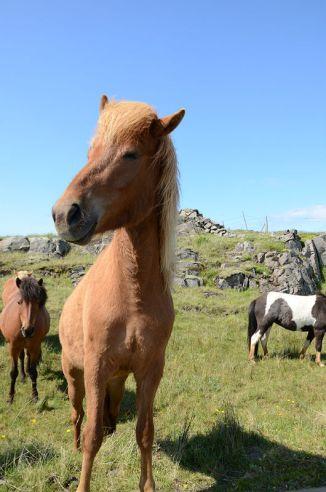 horses02