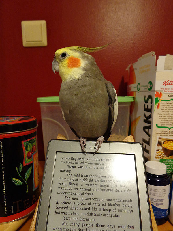 Cockatiel with a Kindle